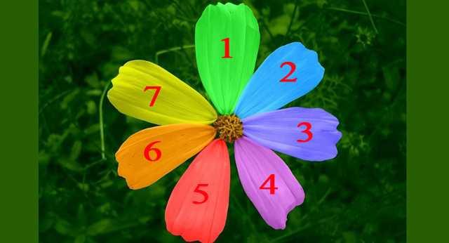 Лепесточек цветка желаний, расскажет когда задуманное исполнится