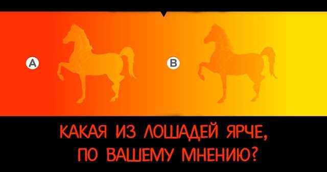 Психологический визуальный тест: какая лошадь ярче