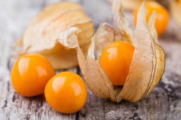 Физалис: полезные и лечебные свойства, как употреблять в пищу, противопоказания