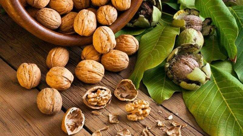 Чем полезен грецкий орех? Полезные свойства и польза для организма