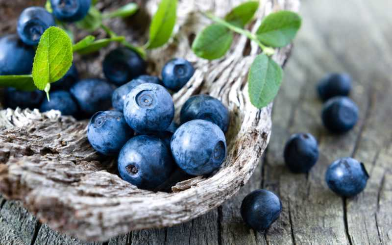 Голубика: полезные свойства для здоровья человека, противопоказания