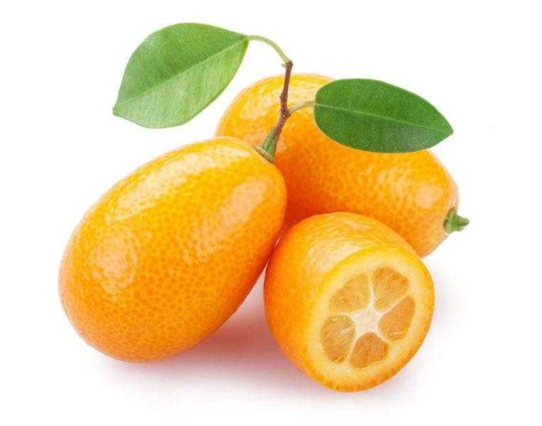 Кумкват что это такое за фрукт. Полезные свойства вяленого кумквата