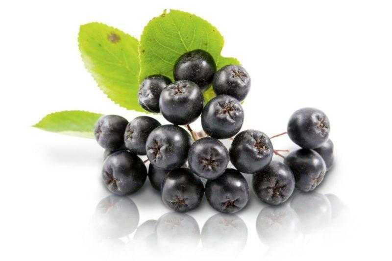 Черноплодная рябина: лечебные свойства и противопоказания
