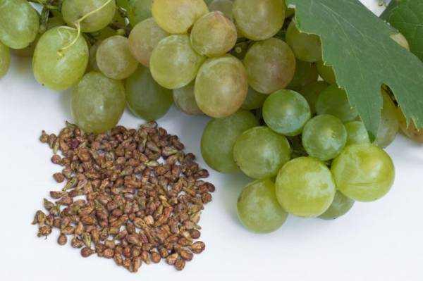 Можно ли есть виноград с косточками? Полезны ли косточки винограда, что в них содержатся?