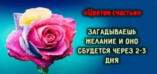 «Цветок счастья»: загадываешь желание и оно сбудется через 2-3 дня...