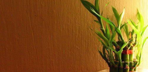 Самые удивительные талисманы в традиции фен шуй