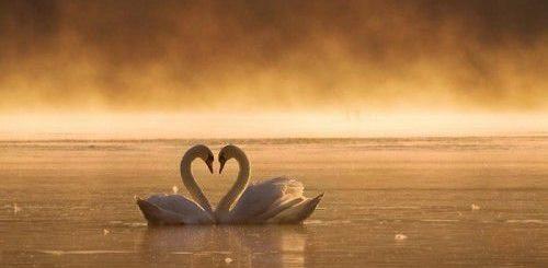 Линия любви и ее значение в хиромантии