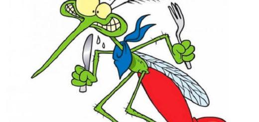 8 запахов, которые заставят комара отказаться от Вашей крови