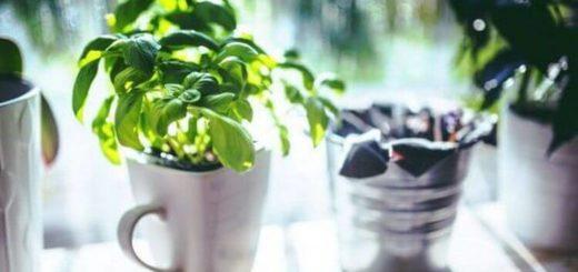 19 съедобных растений, которые вообще без проблем можно вырастить на дому