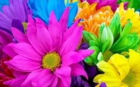 Приметы о цветах