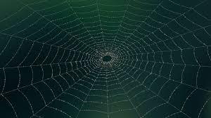 К чему снится паутина по соннику Миллера, Фрейда, Цветкова