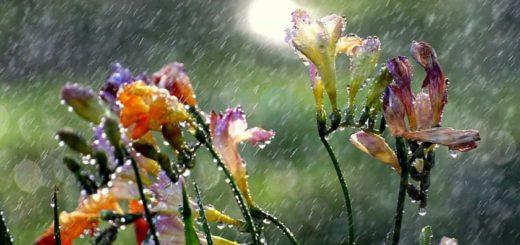 К чему снится дождь по значениям сонников и известным толкованиям