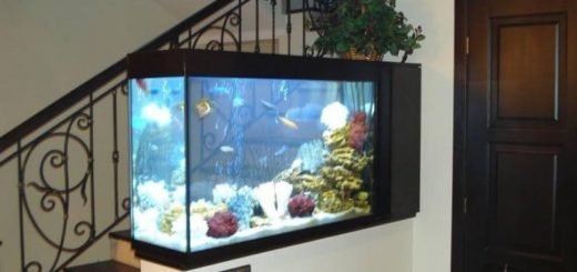 К чему снится аквариум с рыбками по сонникам Лонго, Фрейда, Ванги, Миллера