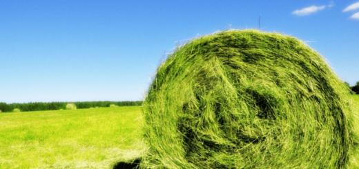 К чему снится сено, что означает сено по сонникам
