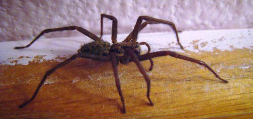 Приметы про пауков согласно представлениям разных народов