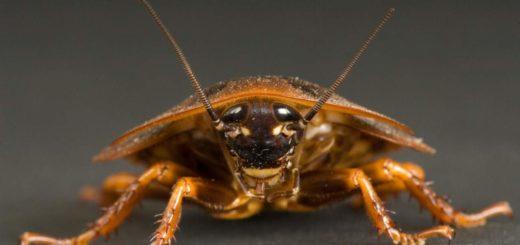 К чему снится убить таракана во сне? Сонник Ванги. Сонник Миллера.