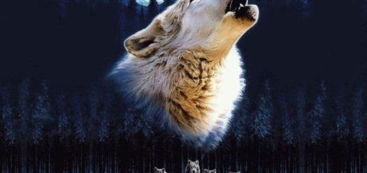 К чему снятся волки, которые нападают?