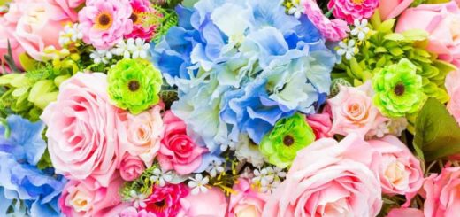 К чему снятся цветы по сонникам: Миллера, Ванги