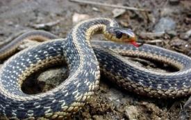 Змея: значение символа