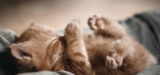 К чему снится котенок толкование по сонникам Нострадамуса, Миллера, Лоффа