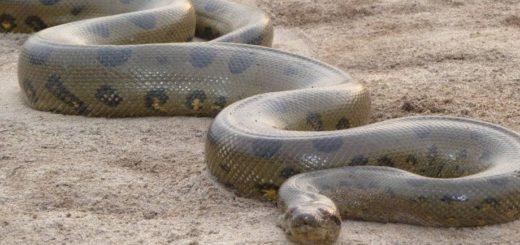К чему снится большой змей по сонникам Миллера, Ванги, Фрейда