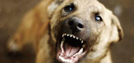 Сонник: собака кусает за руку