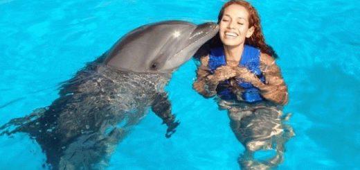 Дельфин в море - сонник для женщины