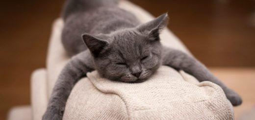 К чему снится серый кот по сонникам Фрейда, Ванги, Лоффа и Миллера