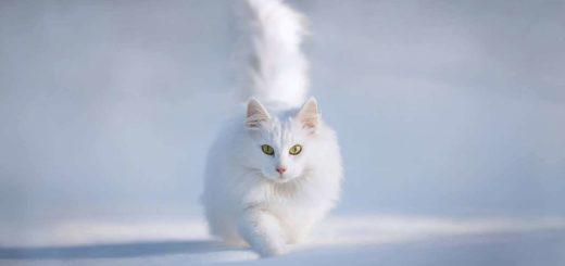 К чему снится белая кошка по известным сонникам
