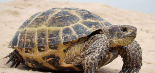 К чему снится черепаха по сонникам Ванги, Миллера и Велеса.