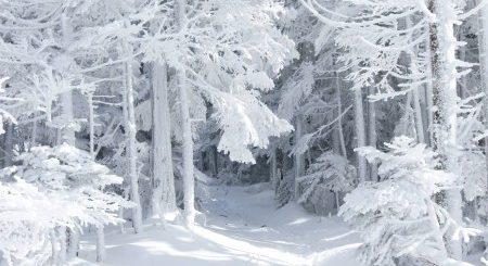 К чему снится идти по снегу по сонникам - Миллера, Хассе
