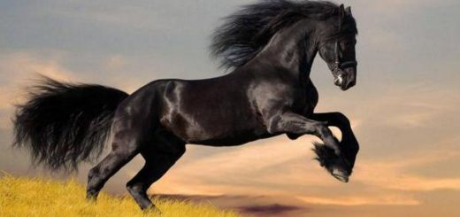 К чему снится черный конь, как толкуют образ сонники Миллера, Хассе, Фрейда, Ванги