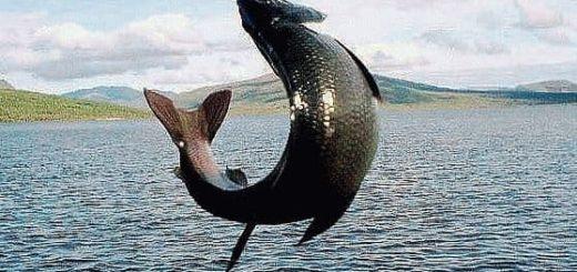 Примета: рыба выпрыгивает из воды