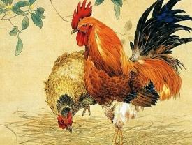 Приметы и суеверия о петухе