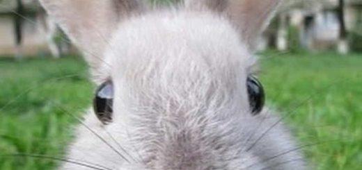 К чему снится заяц и толкование сновидения по сонникам