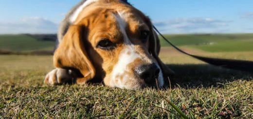 К чему снится умершая собака по популярным сонникам