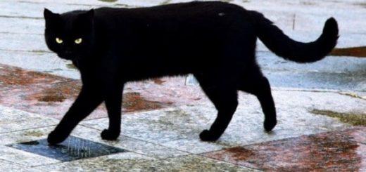 К чему снится кошка по сонникам Миллера, Фрейда, Ванги
