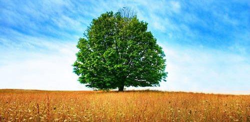 К чему снится дерево по сонникам - Миллера, Цветкова и других.