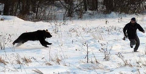 К чему снится убегать от медведя по различным сонникам