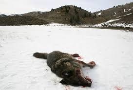 К чему снятся мертвые животные по соннику Миллера, Фрейда, Ванги