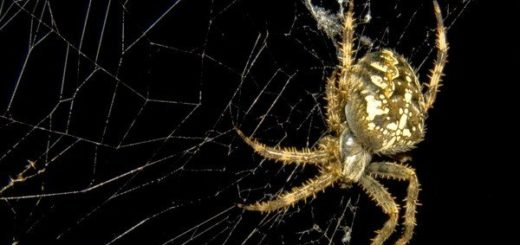 К чему снится паук и паутина по сонникам Гришиной, Миллера
