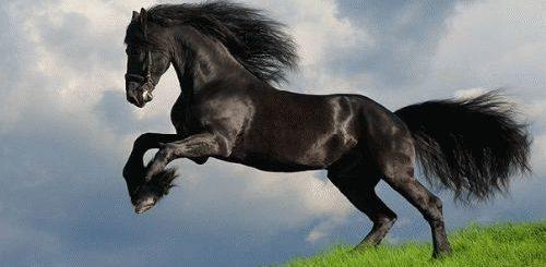 К чему снится лошадь во сне?