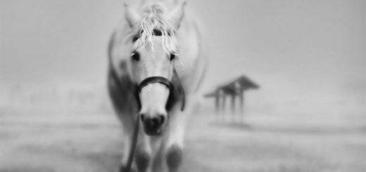 К чему снится Белый конь - расшифровка сна по соннику Ванги, Миллера, Фрейда