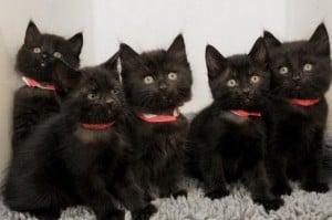 К чему снятся чёрные котята по различным сонникам