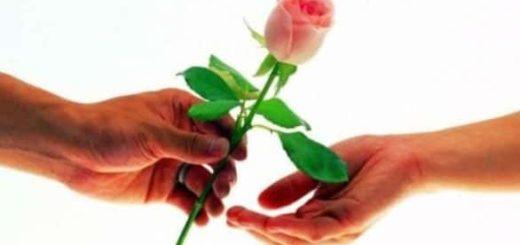 К чему снятся розы во сне по сонникам Миллера, Менегетти