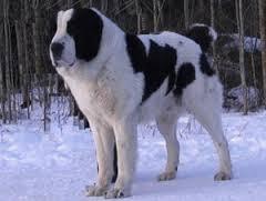 К чему снится злая собака по соннику Нострадамуса, Ванги, Миллера