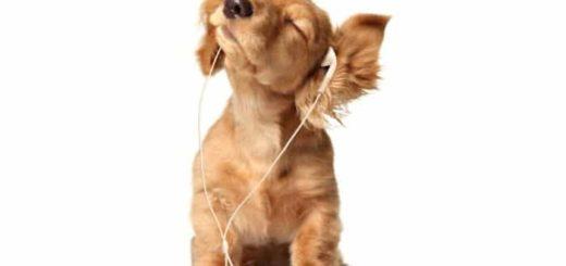 К чему снится щенок девушке - толкование по различным сонникам.