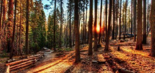 К чему снится лес по сонникам Миллера, Хассе, Эзотерический сонник