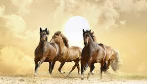 К чему снится лошадь девушке по сонникам Фрейда, Миллера, Ванги