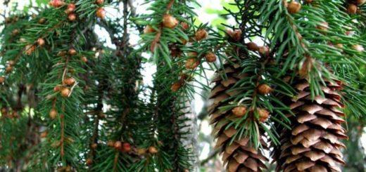 К чему снится елка по сонникам Миллера, супругов Зимы